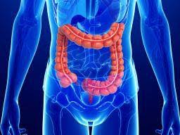 Blood vessel dysfunction likely to cause inflammatory bowel disease