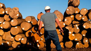 Difficult times for Hardwood Lumber firms in the U.S due to trade war