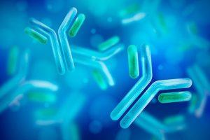 Custom Antibody Services